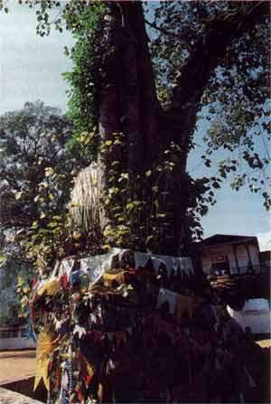 Offerings left at the Bo tree at Maha Saman Devale